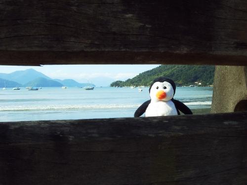 Tux na praia